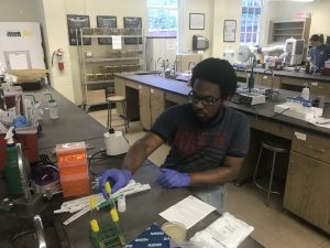 The author prepares DNA for analysis