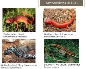 Herps HSC example