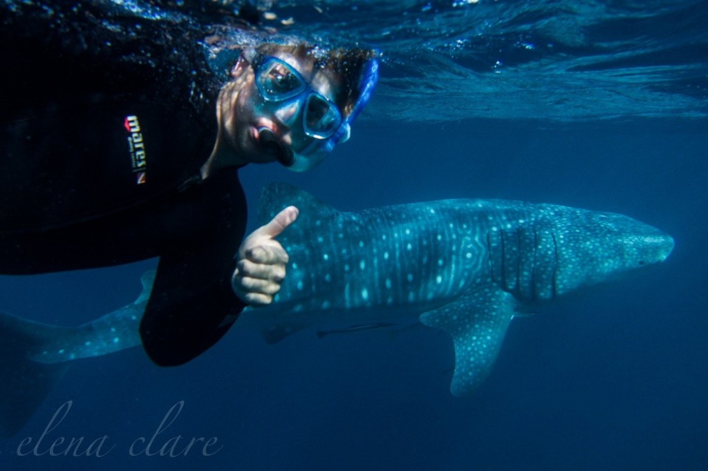 Me swimming with a 14-foot whale shark at Ningaloo reef.
