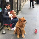 Cool street performer and her dog just outside of the Edinburgh Castle.