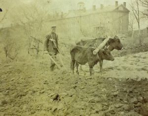 John Evans, janitor, bell ringer, and groundskeeper, plows a field behind Penshurst